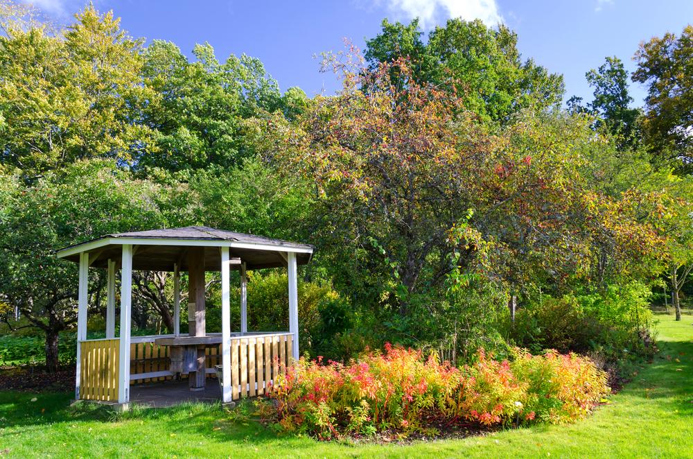 Sommarens trädgårdsfunderingar